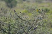 Grande varietà di uccelli