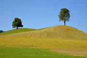 Due alberi