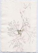 Luft, 20,0 x 29,5  cm, Zeichnung / Aquarell
