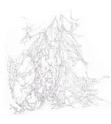 Glandula thyroidea, 30,0 x 40,0 cm, Zeichnung
