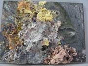Maria Vogl, Fisch hinter Riff, 24x18, Öl auf Holz