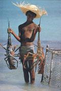 "carte postale "" Guadeloupe """