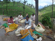 In the hill area of Valparai, the branch Karunya Social Service Centre works with the village inhabitants who mostly work as tea pluckers.
