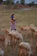 She started with two sheeps by taking a loan and now her flock increased to a number of 35 sheeps.