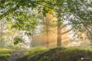 Landschapsfotografie: Zonnenharpen door het bos op de Posbank; genoemd: Light