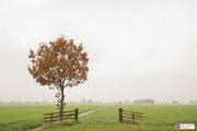 Herfst in de Alblasserwaard