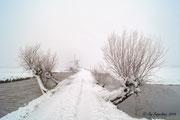 Wondering snowland