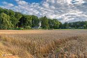 Landschapsfotografie: Graanveld nabij Hoog Soeren tijdens het laatste zonlicht!