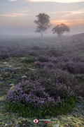 Landschapsfotografie: 'Before sunrise' op de Zuiderheide nabij Hilversum (Noord-Holland, Nederland).