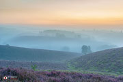 Landschapsfotografie: Zonsopkomst boven de bloeiende heide van de Posbank!