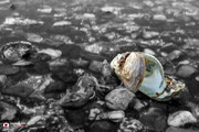 Bewerking van een oester in een detailopname.
