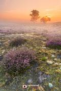 Landschapsfotografie: 'Zuiderheide' op de Zuiderheide nabij Hilversum (Noord-Holland, Nederland).