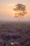 Landschapsfotografie: 'Purple' op de Zuiderheide nabij Hilversum (Noord-Holland, Nederland).
