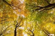 Abstracte benadering van de herfst, genaamd: Above.