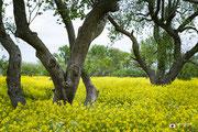 Landschapsfotografie: Creatieve benadering van landschapsfotografie