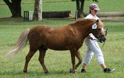 MISTRAL als Senior Champion, 25 jährig, Ponyschau in Bern Herbst 2012
