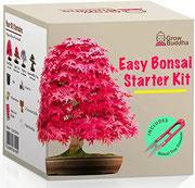 Züchte dein eigenes Bonsai - Züchte einfach 4 Arten von Bonsai-Bäumen mit unserem kompletten, anfängerfreundlichen Starter-