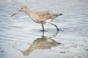 Réserve Ornithologique du Teich - Stephane Moreau Photographe