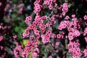 arboretum angers stephane moreau photographe fuji jupiter helios