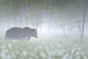 Ballade de l'ours