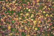11月上旬 地面はキャンバスのよう