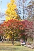 11月中旬 大きな銀杏の木の下で
