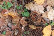 11月上旬 秋の遊歩道には色々なものが落ちています
