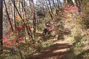11月中旬 秋の遊歩道