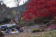 11月中旬 紅葉狩りピクニック?