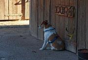 Wachhund 13