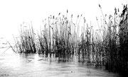 Weiden am See - Jänner 2010