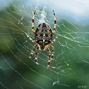 Spinne spinnt - 09-2009