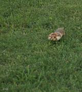 Hamsterbacken muß man anfüllen!