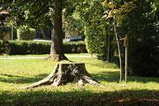 NK_Stadtpark_2013-09-07_061 - Baumstumpf ebenfalls in der Nähe der Mühle