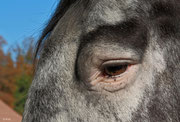 034 Weras Auge mit Wimpern und Tasthaaren.