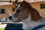 Wachhund 11
