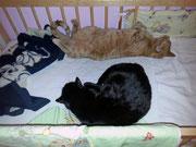 Charly & Nicky - Juni 2014 - gemeinsam warten bis das Baby wieder kommt