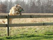 ...üüüüber den Zaun (mein Lieblingsbild)