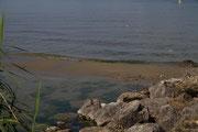 Die Sandbank wurde von mehreren Wellen, verursacht durch den Raddamfer Neuchatel, überspült. Das Ei ist verschwunden.