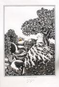 """Frank Zeidler, Dessin original , encres, aquarelle, crayon. 50X70cm -  Galerie Gabel, Biot- """"Les pommes du soleil"""""""