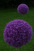 Privatgarten: Solitärpflanzen mit besonderem Blüheffekt schaffen immer wieder im Gartenjahr neue Akzente im Pflanzbeet.