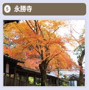 創建は、天武天皇9年(680)といわれ、本尊は薬師如来です。皇后の病気を平癒するために祈願されたとされ、「出雲の一畑」「伊予の山田」と共に日本三大薬師の一つに数えられています。柳坂の地名起源を思わせる推定樹齢200年以上の「アカメヤナギ」(市指定天然記念物)の大木、「ケンポ梨」(市指定天然記念物)などがあります。