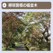 昭和39年5月、県の天然記念物に指定されたハゼ並木で、南北約1.1kmに現在約200本が現存しています。この並木は、全国街路樹100選にも選ばれています。青木繁は「わが国は 筑紫の国や 白日別 母います国 櫨多き国」と詠んでいます。