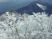 【高見山の樹氷】 高見山は、奈良県東吉野村と三重県松坂市の境界にあり、標高は1249m。冬に樹氷を見ることができることで有名。近畿の百名山に数えられている。その他、奈良県には、「八経ガ岳」「釈迦ガ岳」「日出ガ岳(大台ケ原)」「笠捨山」「金剛山」など多くの名山がある。