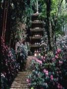 【室生寺】 室生寺(むろうじ)は、奈良盆地と当方、宇陀市にある真言宗室生寺派大本山。平安時代前期の建築や仏像を伝え、境内はシャクナゲの名所として有名。写真の五十塔は、800年頃の建立で、国宝に指定されている。