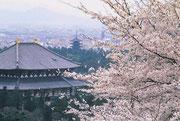 【東大寺】 写真は金堂(大仏殿)で高さ46.8メートル。興福寺の五重の塔とともに旅行の記念に撮影しておきたいポイントのひとつ。