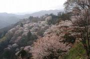 【吉野山】 吉野山は、奈良県中央部にある標高455mの山。大峰信仰登山の根拠地で、世界遺産に登録された。吉野山から大峰山を経て熊野三山へ続く修行道は、大峰奥駈道と言われている。また吉野山は、山すそから、下・中・上・奥の千本呼ばれ、春には、多くの花見客が訪れる。