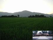 【大神神社(三輪明神)】 奈良盆地の東、桜井市には、ひときわ形の整った円錐形の三輪山がある。このお山は、大物主神(おおものぬしのかみ)の鎮まります神体山として信仰されており、万葉集にも度々登場する。そして、これを仰ぎ見るように大神神社・拝殿が建立されている。そのため、今日でも本殿を有さないことで知られている。また、古事記・日本書紀に記される創建の由緒などから、日本最古の神社とも称されている。 写真の大鳥居は、奈良盆地中心部からでも見ることができるので、観光の際には注意して東の山裾をご覧ください。