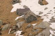 Alpe di Scench 1897 m