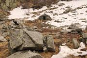 Cugn 1824 m (Val di Cugn) (GR)